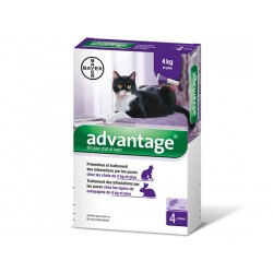 ADVANTAGE 80 Chat Lapin plus de 4 kg 4 pipettes 0.8 ml
