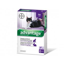 ADVANTAGE 80 Chat Lapin plus de 4 kg 6 pipettes 0.8 ml